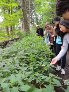 Touching Jewel Weed at Virginia Woods